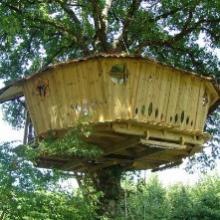 Cabane dans les arbres dans la Vienne