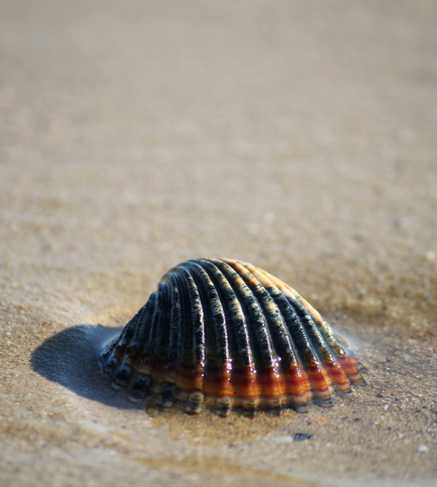 Vacances à la mer au Cap d'Agde