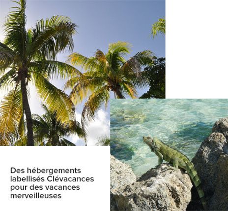 Vacances en villa en Guadeloupe